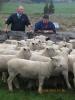 "Graham Sidey & Rob Hall with \""Rawa\"" Ram Lambs"