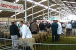 canty-a-p-show-2012-015