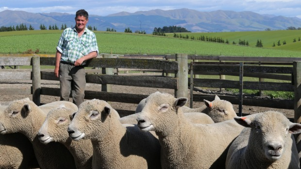 Southdown stud breeder Chris Medlicott had the top price at the recent Christchurch ram sale for his southdown ram Clifton Downs-279-14.