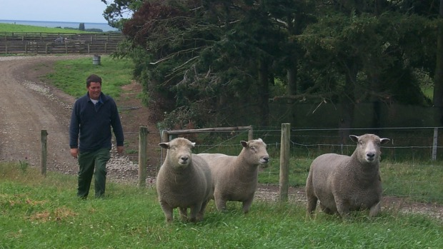 Chris Medlicott, from Waimate, has held the world record for selling a $16,000 southdown ram.