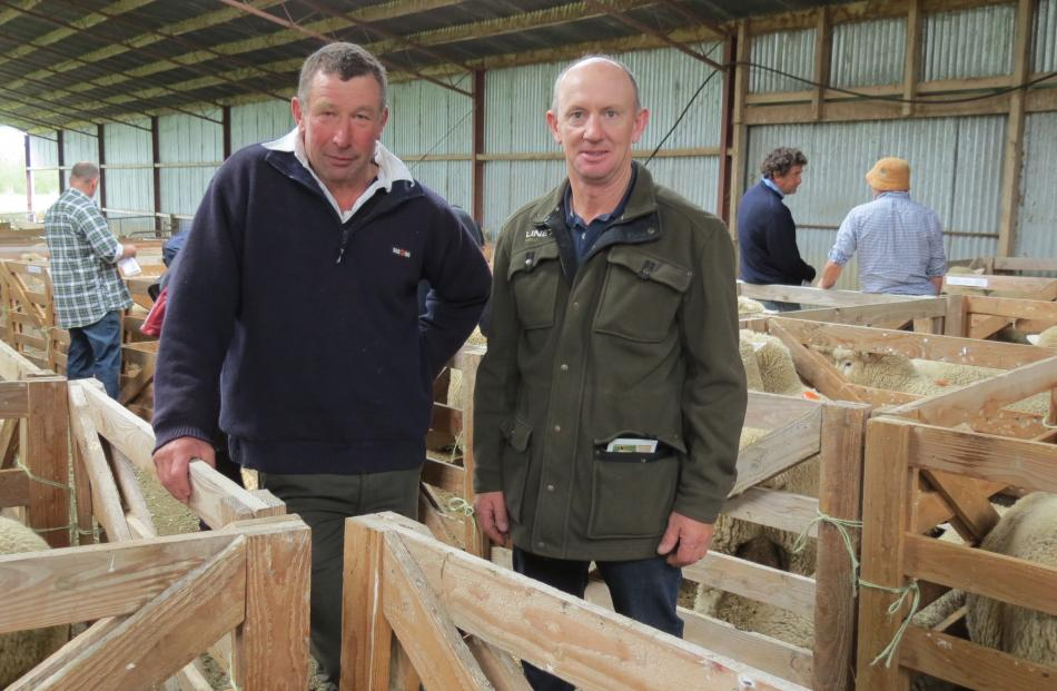 Visitors from North Otago (from left) Martin Parsons and Ross Nimmo look at Romney and Southdown rams on sale at the Merrydowns stud.
