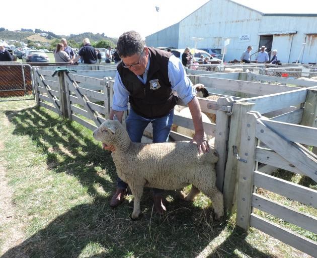 Hook breeder Chris Medlicott was delighted to win the David Simpson Cup with his Southdown ewe lamb, the breed featured in memory of the late Dave McClea.