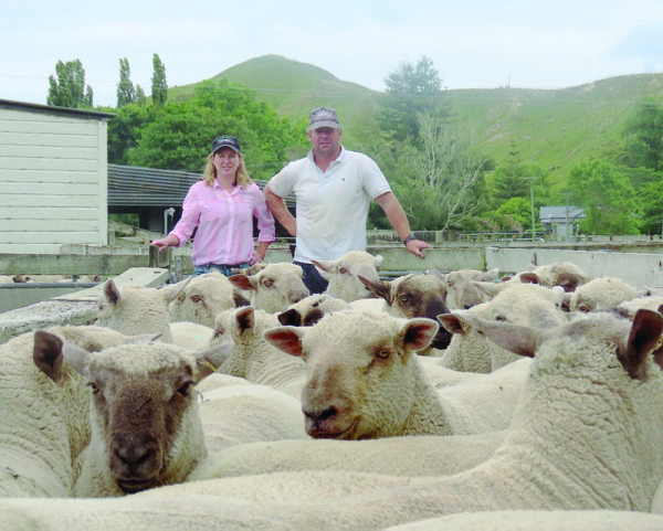 SECOND ON-FARM: Tracey and Andrew Powdrell (pictured) with some of the Turiroa Tiger rams that will be up for auction on their on-farm sale on December 12. The couple are rapt with the quality of their up to 115 lineup, across four varieties.