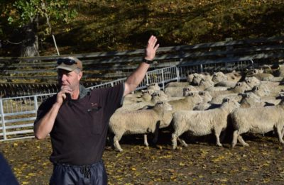 Riverside stud owner Don Murray, of Waitahuna, speaks about his farm on a stop of the Southdown Sheep Society of New Zealand's national southern tour last week.